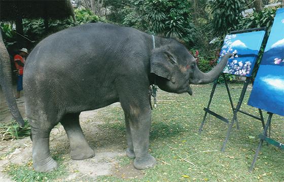 絵を描く象の写真